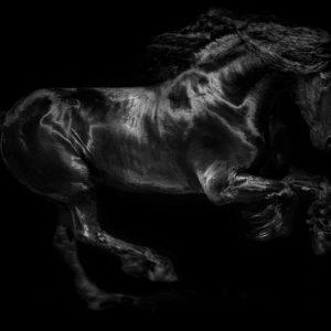 חגורות לסוס